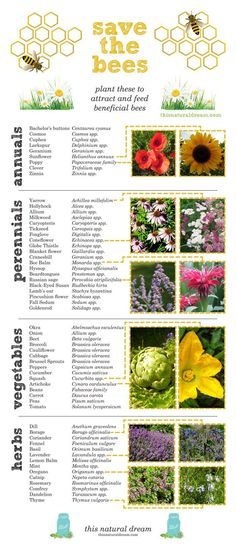 Save the bees by creating a bee friendly garden!  Read more at http://thisnaturaldream.com/bee-friendly-garden/#adjM8m50T3ykZOUg.99