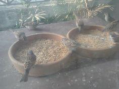 savingsparrows