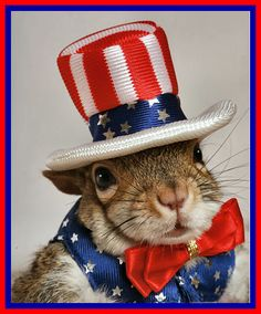 Sugar Bush Squirrel here...please read this article and tell me what you think. Should animals become citizens? If smuggled into the US would they be considered illegal aliens? Would animals as citizens have the right to vote? Having run for President of the US twice I am considering a 2016 run so I am very interested in your opinion. Thanks and God Bless America!  http://www.msn.com/en-us/news/offbeat/should-dogs-be-citizens-it%E2%80%99s-not-as-crazy-as-you-think/ar-BBgS6Tp?ocid=U142DHP