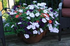 petunias & verbena, gardener says keeping the container on the dry side has helped it grow