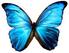 vlinder - Google zoeken