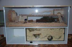 Hamster Tank, Hamster Names, Baby Hamster, Hamster Diys, Cool Hamster Cages, Gerbil Cages, Robo Dwarf Hamsters, Cute Hamsters, Guinea Pig House