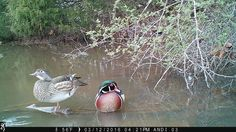 """5 Tips For Capturing Unique Trail Camera Photos on our new blog """"Behind The Lens"""" #BTLwithBTC #browningcameras #youvegottoseethis"""