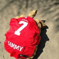 Sammy the tortoise