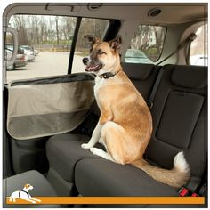 Kurgo Products - Car Door Guard™, $25.00 (http://www.kurgostore.com/dog-travel/car-door-guard/)