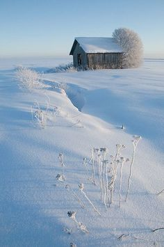 Country Snow Scene | Content in a Cottage