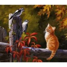 Autumn Country Ginger Kitten Bird Watching.