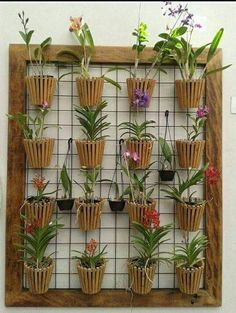 Hanging Succulents, Hanging Plants, Indoor Plants, House Plants Decor, Plant Decor, Small Balcony Garden, Vertical Garden Design, Wooden Plant Stands, Orchids Garden