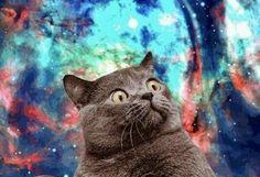 Kedi Forumlarında Karşılaştığımız Beyin Yakan Sorular 3