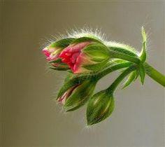 Flower buds..I do not know what kind. Wish I knew.