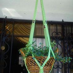 Camastro verde