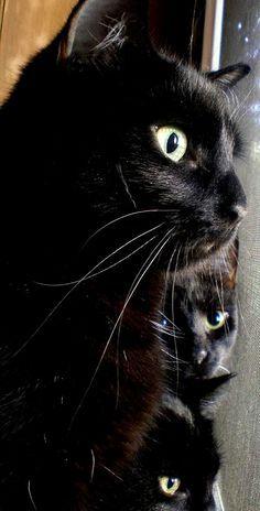 Untitled Cute Black Cats Black Cat Cats
