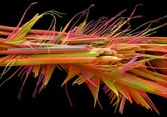 10: Caffeine crystals | 10 Of The Year's Most Amazing Science Photos | Co.Design: business + innovation + design