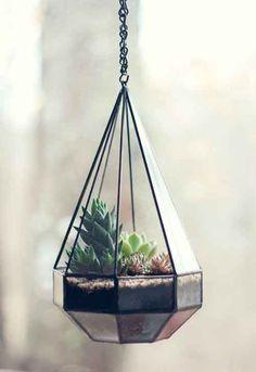terrario plantas colgante