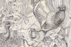 Stemming from Paul Smith's admiration of stately English homes, Birds of Paradise is based on 18th - century Chinoiserie wallpaper - often hand-painted scenes filled with pagodas, dragons, and in this case, exotic birds. Digital manipulation of fine pencil drawings yields a strikingly modern image.