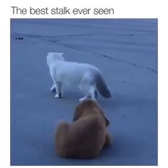 Best Picture For Cutest Baby Animals so cute For Your Taste You are looking for something, and it is Funny Animal Memes, Funny Animal Videos, Cute Funny Animals, Funny Animal Pictures, Cute Baby Animals, Funny Cute, Funny Dogs, Cute Cats, Hilarious