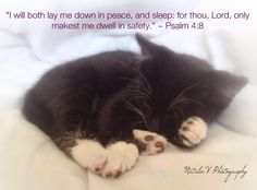 Psalm 4. Psalms. Bible. HolyBible. NatalieVPhotography. Bible Verses of Encouragement. Find my page on Facebook. Psalm 4 8, Psalms, Lay Me Down, Encouraging Bible Verses, Encouragement, Peace, Facebook, Animals, Animales