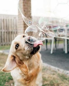 In need a Dog #dogpictures #dogs #aww #cuteanimals #dogsoftwitter #dog #cute
