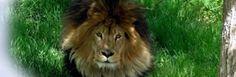 Arbuckle Wilderness Exotic Animal Theme Park, OK