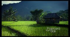 Postcard from Bali (Canon 5d MkII) by Stephan Kot. .: Postcard from Bali