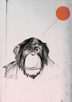 ape & shapes