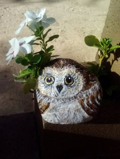 Garden Owl, wide-eyed and looking up at you - perfect for the garden, for the owl lover or in your planter arrangements
