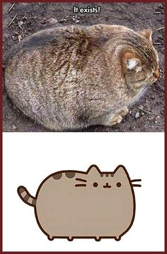 The Real Pusheen // tags: funny pictures - funny photos - funny images - funny. - The Real Pusheen // tags: funny pictures – funny photos – funny images – funny pics – funny - Funny Animal Photos, Funny Animal Memes, Cat Memes, Funny Images, Funny Photos, Funny Animals, Cute Animals, Funny Humor, Memes Humor