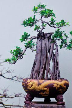 Bonsai by Vyacheslav Frolov, via 500px