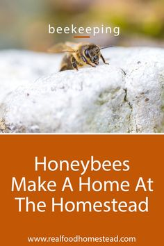 Do you worry about the honeybees? We discuss why we became beekeepers and 6 ways we can help support bees everyday at home. Bee Friendly Plants, Planting Sunflowers, Going Off The Grid, Bee Do, Backyard Beekeeping, Modern Homesteading, Bee Keeping, Organic Recipes, Told You So