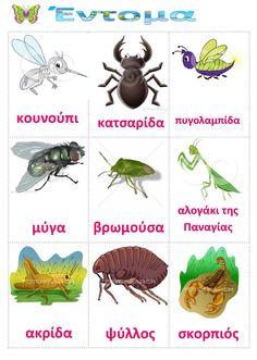 How To Speak Chinese, How To Speak Spanish, Learn Greek, Latin Language, Spanish Culture, Illustration Art Drawing, Animal Habitats, Preschool Education, Character Education