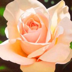 Pintura Moderna al Óleo: Cuadros de rosas