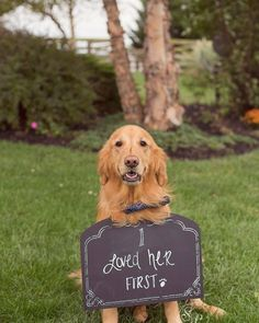 not sure what is cuter...the pup or this wedding sign?!  ~  we ❤ this! http://moncheribridals.com
