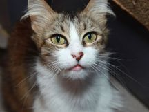 """Adeline"" - is available for adoption at Pets Unlimited!"