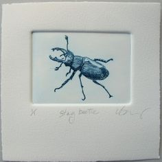 Hand printed with etching ink on Somerset cotton rag paper, Stag Beetle is from a larger body of work studying Devon Hedgerows. This lovely bug has been printed in a small edition of just Each print is hand pulled by me. The x plate is inked with quality Engraving Printing, Stamp Printing, Drypoint Etching, Jobs In Art, Handprint Art, Insect Art, Textile Fiber Art, Elephant Print, Watercolor And Ink