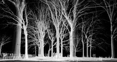 Laser Scanning, Central Park, NYC, Point Cloud, 3D, Black White, Trees, Sheep Meadow