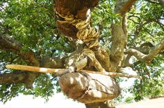 I was surprised and happy to see an old African way of macking rope from anmale skin in the Eastern Cape. Garden Sculpture, Lion Sculpture, South Africa, Cape, Walking, African, Statue, Outdoor Decor, Mantle