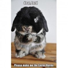 SkunkWire brings you cute and funny animal pictures every day. We got funny cats and cute dogs, plus lots of other funny animal pictures Funny Animal Memes, Cute Funny Animals, Funny Animal Pictures, Cute Baby Animals, Funny Cute, Cute Pictures, Animal Humour, Easter Pictures, Animal Captions