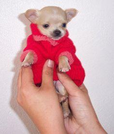Cute overload puppy!