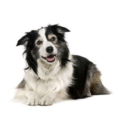 Healthy Steps for a Cleaner Pet