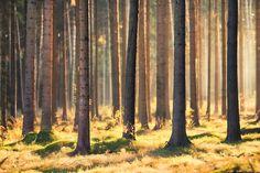 Indian Summer in Woods - Fototapeten & Tapeten - Photowall