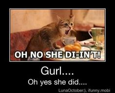 cat_oh_no_she_didnt