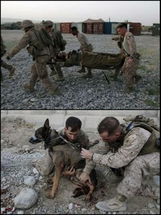 Top: September 8, 2011 photo, U.S. military personnel rush U.S. Marine dog handler Sgt. Kenneth Fischer, of the 3rd Marine Expeditionary Force K9 Unit, to get medical care after he was wounded in a bomb attack in Afghanistan. Fischer's MWD, named Drak, was also wounded in the bomb attack.  Bottom: U.S. Marine dog handler Sgt. Mark Behl, left, and another Marine perform first aid on Drak. (AP photos by Brennan Linsley)…
