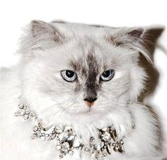 animal  Idéias de Jóias para Gatos