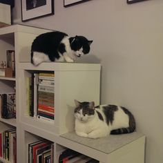 Well Read Monochrome Modernists Love Expedit Too
