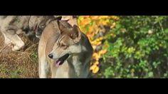 Keshet Kennels/Rescue - An Autumn Moment