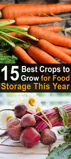 15 Best Crops to Grow for Food Storage This Year. One of the keys to a successful harvest and storage is choosing the right seeds or stock to plant in the beginning. #Homesteadsurvivalsite #Foodstorage #Growingyourowncrops #Livingoffthegrid