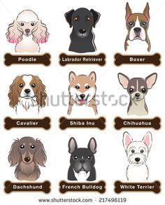Poodle Stock Illustrations & Cartoons   Shutterstock