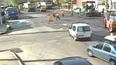 (Awesome) People Chased By Animals Supercut Compilation Good People, Picture Video, I Laughed, Funny Animals, Cool Pictures, Wildlife, Awesome, Youtube, Videos