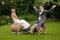 Wedding Sheep!