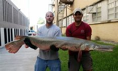 A giant fish that can reach over eight feet with sharp teeth, the alligator gar is a fearsome beast. Jeremy Wade, Living Fossil, Fish Home, Giant Fish, Monster Fishing, Different Fish, Underwater Photography, Fishing Tips
